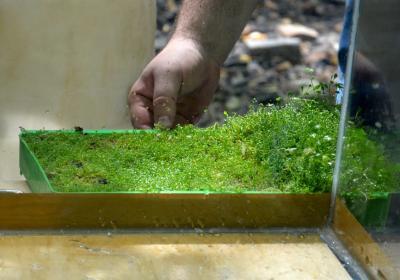 Когда можно сажать растения в аквариум 400