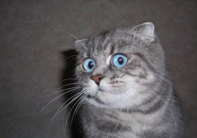 Кот не может зачать