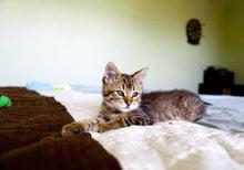 Кот трется анальным отверстие о поверхности