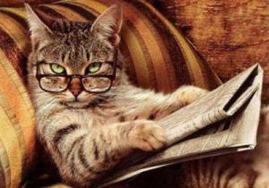 Питание кошки в домашних условиях 55
