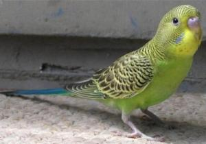 Сколько лет живут различные птицы в том числе вороны и попугаи 47