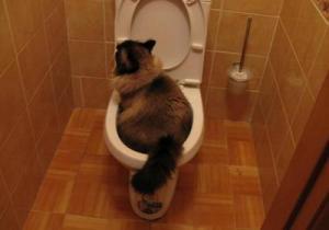 Причины диареи у котов лечение