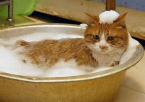 Когда и как лучше мыть кота