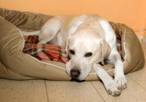 Есть ли тесты на беременность для собак
