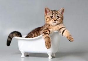 Как часто можно мыть кошек