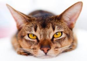 Как повысить температуру у кота