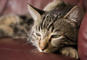 Лечение инсульта у котов