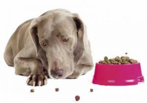 Что делать если собака не ест