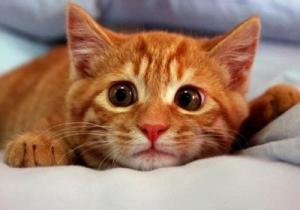 Что делать если кошка не ест