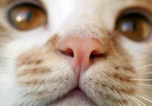 Если у кота сухой горячий нос