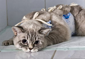 Делать если кот не отходит наркоза