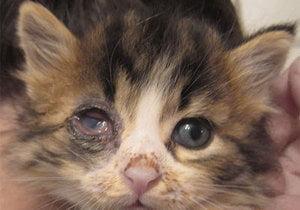 Чем чистить глаза котенку: советы ветеринаров 732