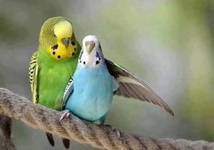 Сколько лет живут различные птицы в том числе вороны и попугаи 9