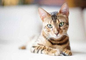 Кот не может сходить пописать