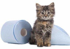 Насморк у кошек: лечение в домашних условиях - Ветеринар Гид 33