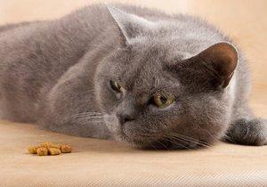 Что делать если нет кота для вязки