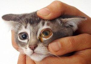 Чем чистить глаза котенку: советы ветеринаров 52